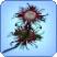 Todespflanze